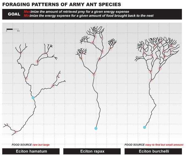 Instytucje i firmy powinny uczyć się współdziałania od mrówek?