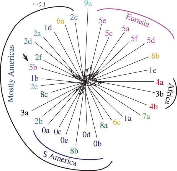 Ciekawy wgląd w ewolucję języka – genetyka morfologii, gramatyki