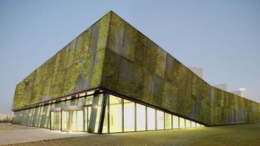 Nowy beton biologiczny - ekologiczny pomysł na ogród naścienny