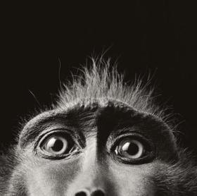 Czym wyróżnia się mózg ssaków samoświadomych?