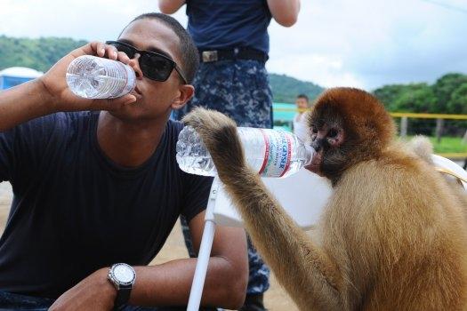 Małpy w imię dobrobytu ryzykują tak samo jak ludzie