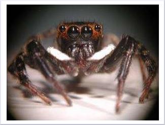 O pająku, który nie tka sieci