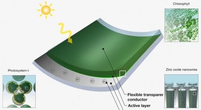 MIT tworzy ogniwa słoneczne z trawy