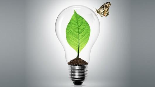 Rośliny jako najlepsze źródło energii?