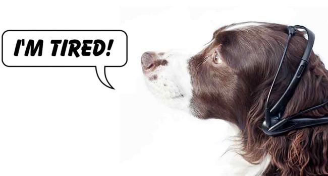Pies przestanie szczekać i zacznie mówić?