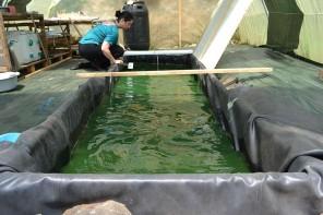 virisis_algae_greenhouse
