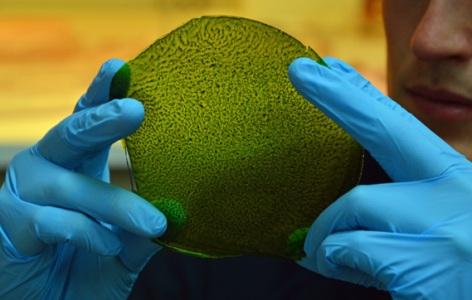 man-made-leaf
