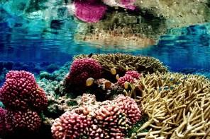 coral-reef-at-palmyra-atoll-national-wildlife-refuge