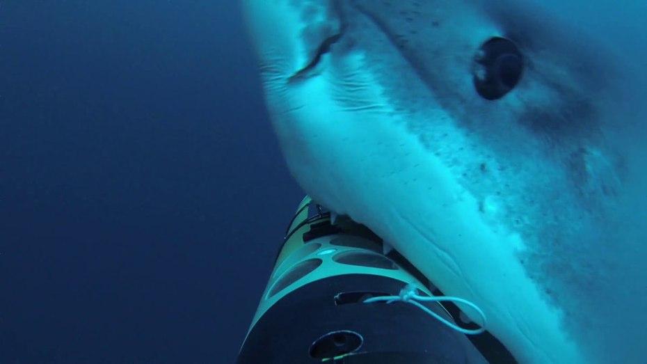 remus-sharkcam-1