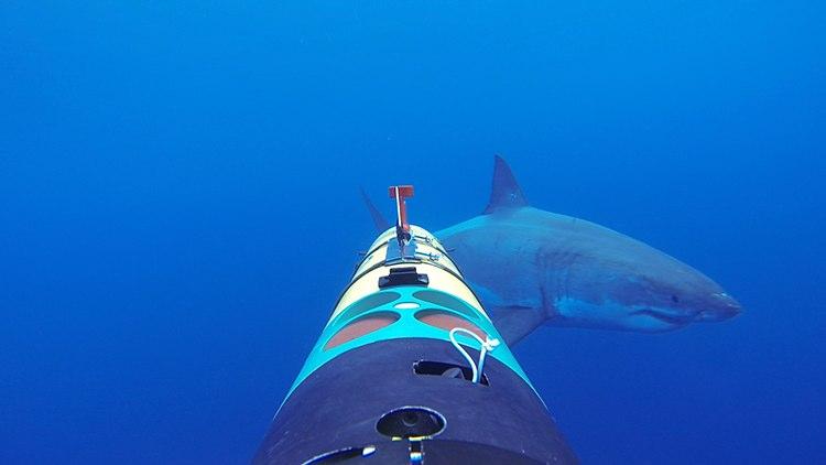 remus-sharkcam-5