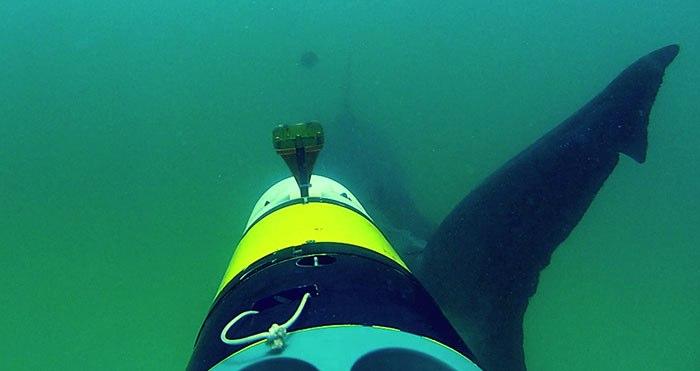 remus-sharkcam-8