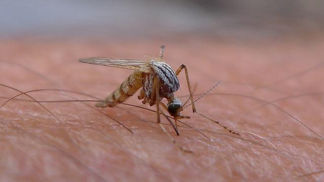 Automatyczne działko laserowe na komary