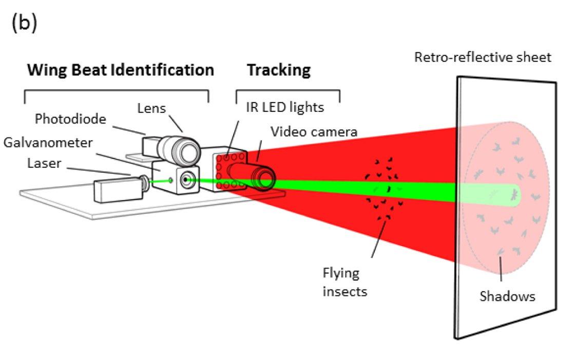 bug-laser-02