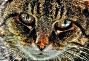 Czy koty wiedzą jak działa grawitacja?
