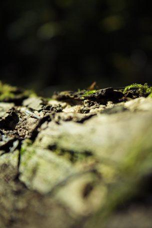Michał Paca o oczyszczalniach i mikroorganizmach