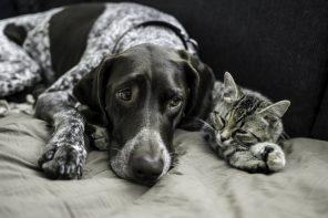 7_Choroby odkleszczowe zwierząt – czy naprawdę są takie groźne