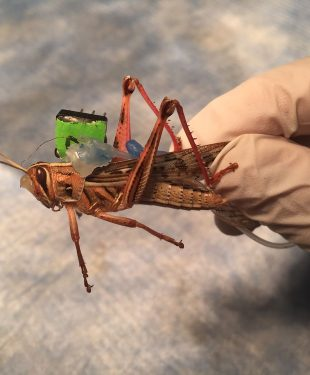 locust3