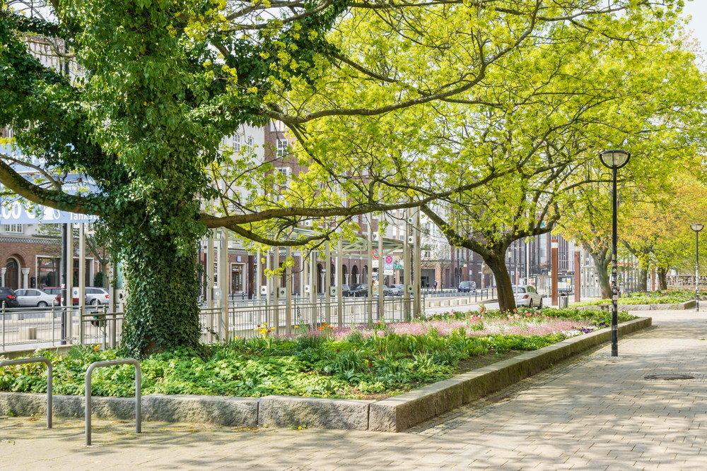 Rośliny idealne na tereny miejskie 3