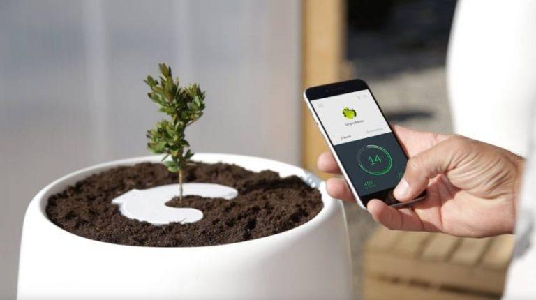 Z prochu powstałeś - w drzewo się obrócisz, czyli ekologiczny sposób na pochówek