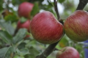 orchard-3416122_640