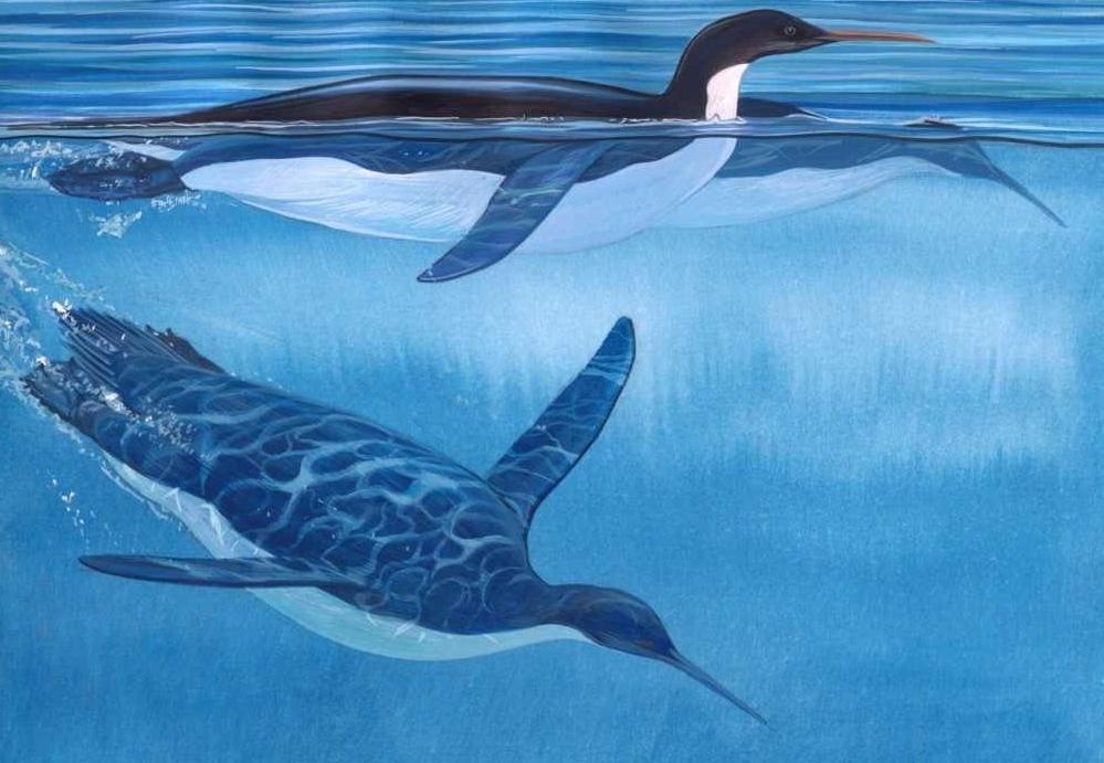 Jak wyglądał przodek pingwina?